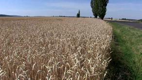 Erhöhtes CO2: Grünere Erde und reichere Ernten