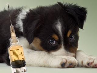 VACUNAS de Perro - Medicina preventiva