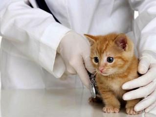 VACUNAS de Gato - Medicina preventiva