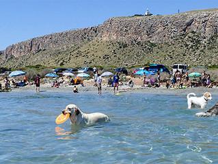 ¿A tu mascota le gusta la playa? Consejos para que la disfrute al máximo sin riesgos.