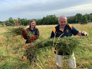Two volunteers clearing ragwort by hand