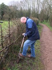 A volunteer planting hedge saplings at Trotshill Community Orchard