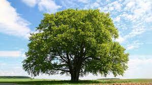 TREES - WHY WE SHOULD APPRECIATE THEM