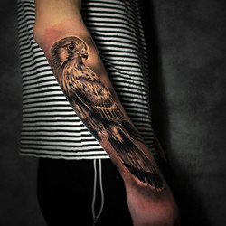 faucon2