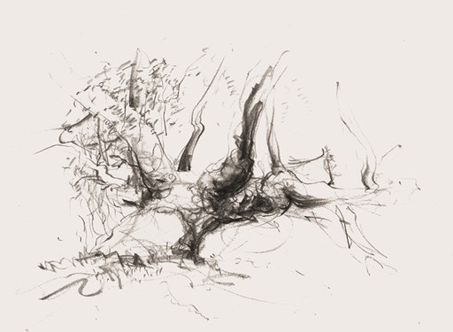 Hubert Warter - Zeichnung - Bleistift - Baum - drawing - pencil - tree
