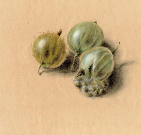 Hubert Warter - Zeichnung - Pastell - StachelbeerenDrawing - Pastel - Gooseberries