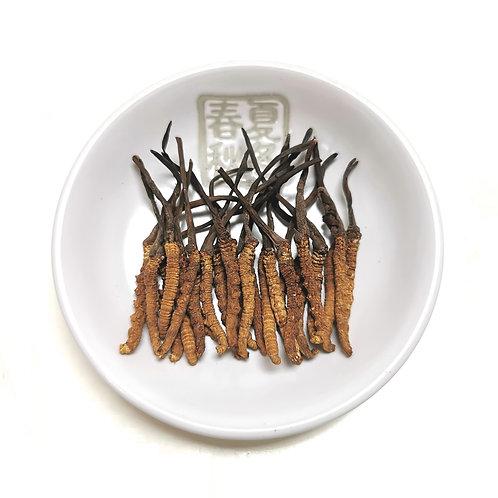 西藏那曲冬蟲夏草(135支) 每兩 (約37.5克)