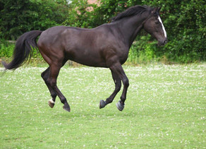 Veteran Horse/Pony - Online Showing Show
