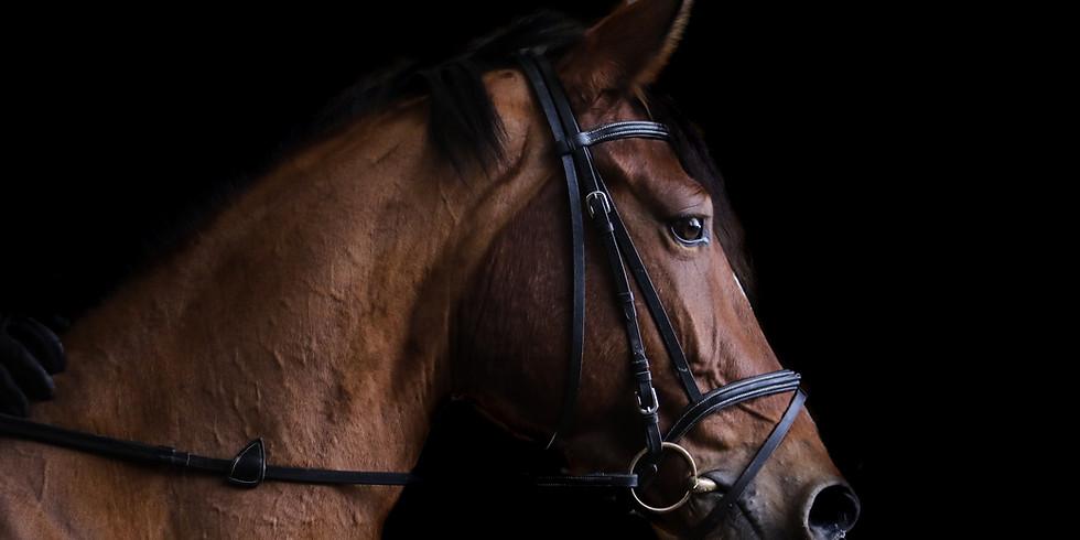 Horse & Rider Biomechanics - online