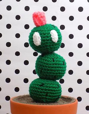 Plante Cactus Mario en pot