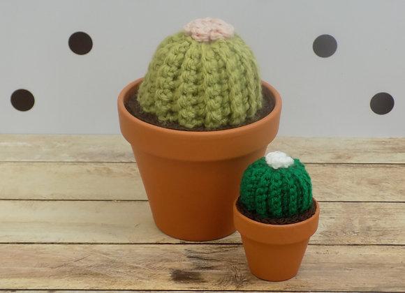 Grand Cactus rond avec fleur