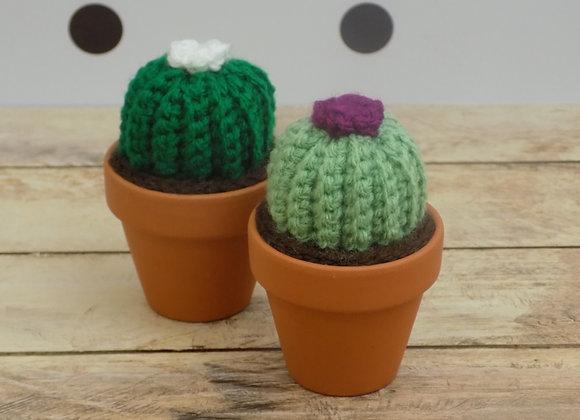 Cactus rond avec une fleur