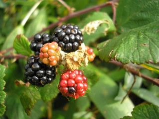 Foraging for Life