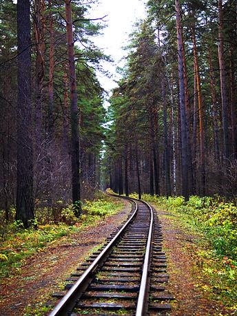 TSE Forest.jpg