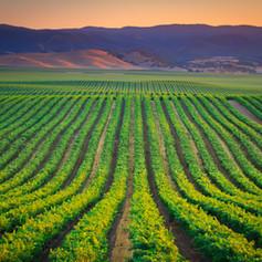 Scheid Vineyards 140717-27.jpg