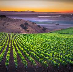 Scheid Vineyards 140717-37.jpg