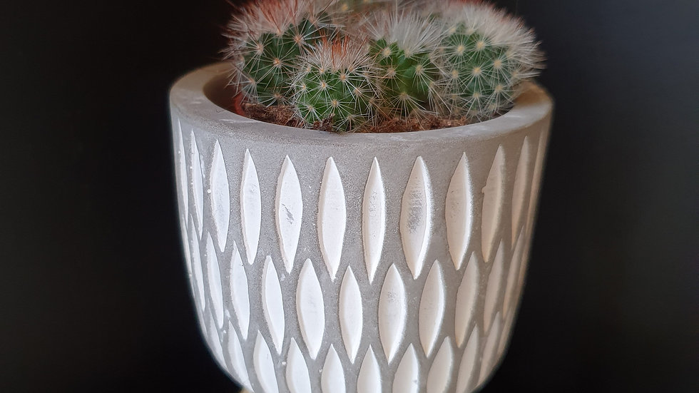 Small cacti in pot with wooden legs