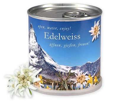 edelweiss Blumendose