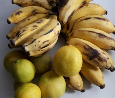 Nutritional Benefits of Burro Bananas and (seeded) Key Limes