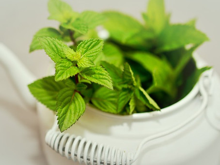 11 Herbs You Can Easily Grow Without a Garden