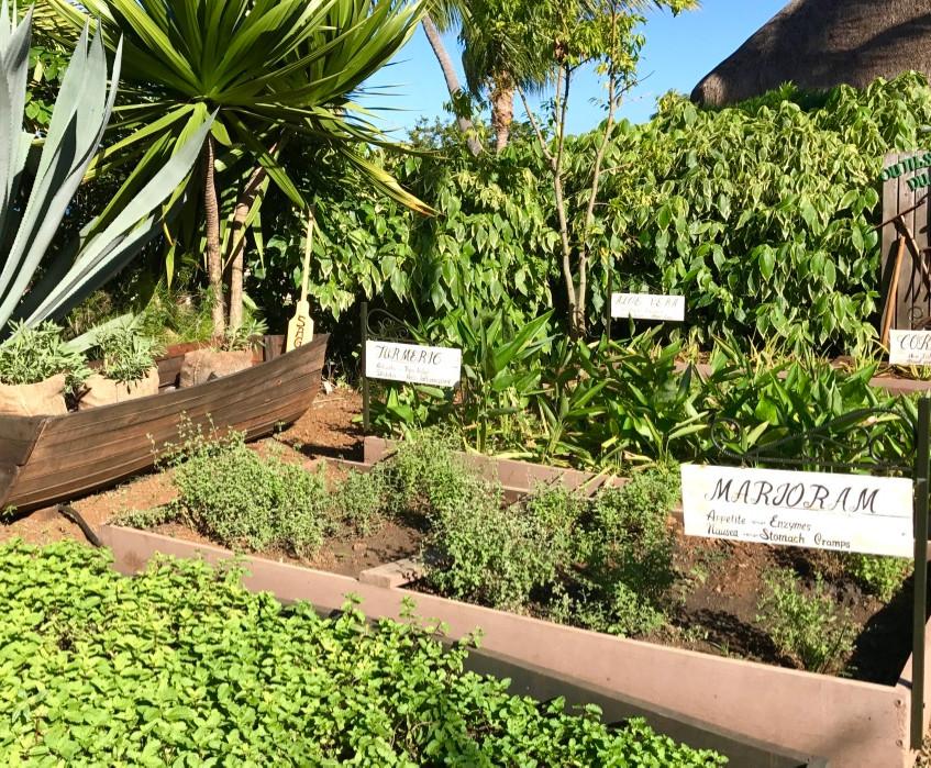 Herbs & Boats