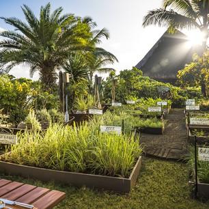 """Собственный сад душистых трав и ресторан на свежем воздухе """"The Herb Trail"""" в The Oberoi M"""