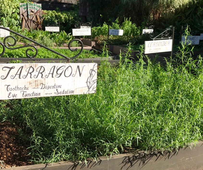 Herb Tags & Benefits