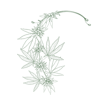 CANNABIS accent BACKGROUND.png