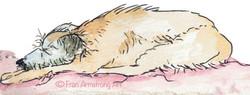 Rufus the Lurcher