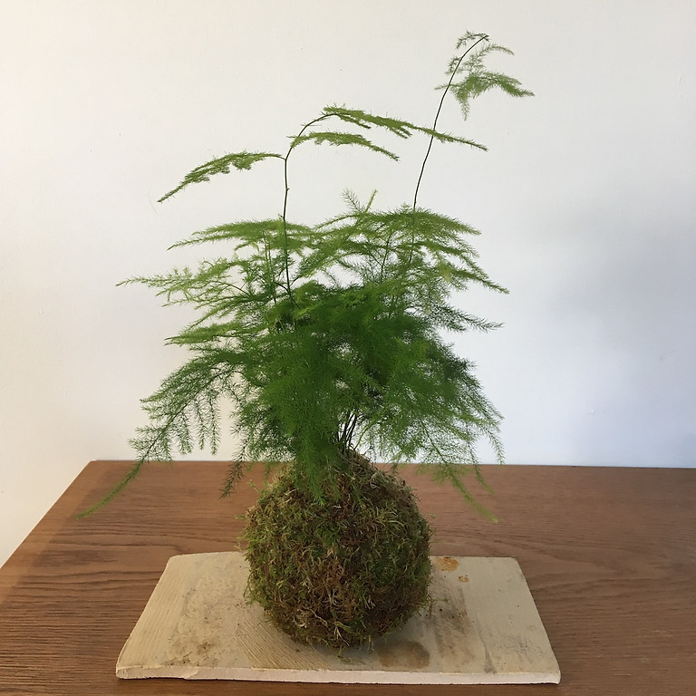 workshop kokedama en bosbad