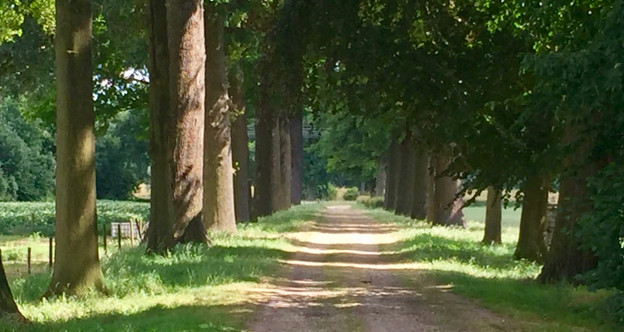 Tree-lined walk
