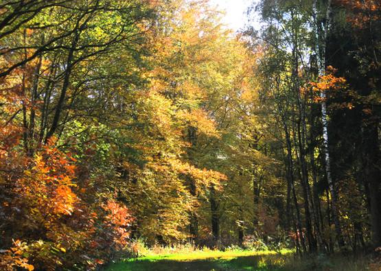 Heibloem forest
