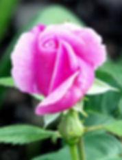 pink-433737_1920_edited.jpg