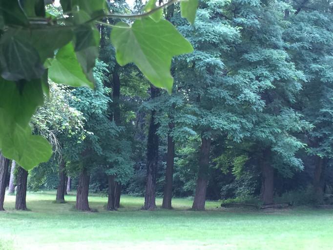 Wooded area in Heibloem