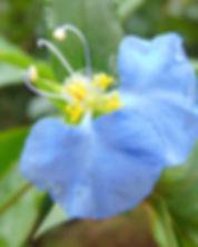 flower-2669959_1920.jpg