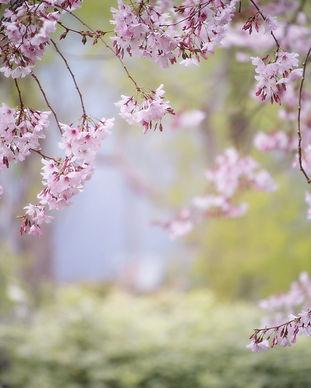 pink-2832485_1920.jpg