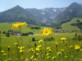 flowers-389799_1920.jpg