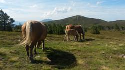 chevaux col de pailheres.jpg