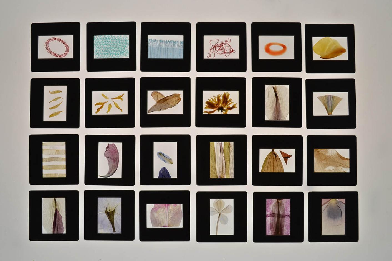 Slides - An Emotional Archive (2019-20)