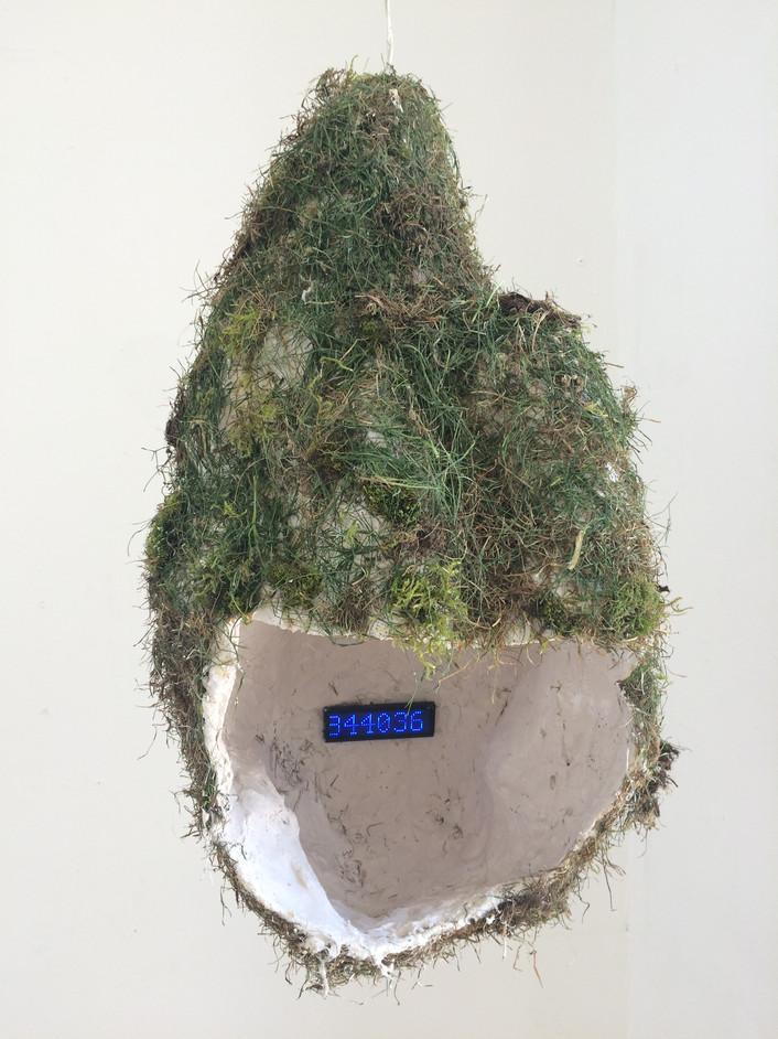 Bird(phone)call (2019)