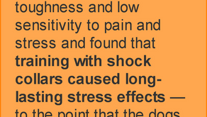 What Does Science Say About Shock?