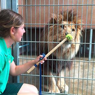 training-a-lion-for-health-checks.jpg