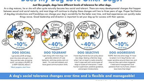 Is Your Dog Dog-Friendly?