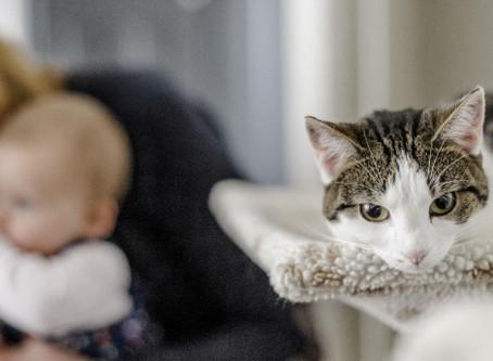 Pet Meets Baby