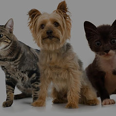 Pets_edited.jpg