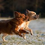 Dogs%20Running_edited.jpg