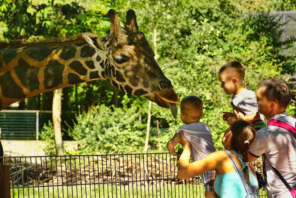 San Diego, California Zoo
