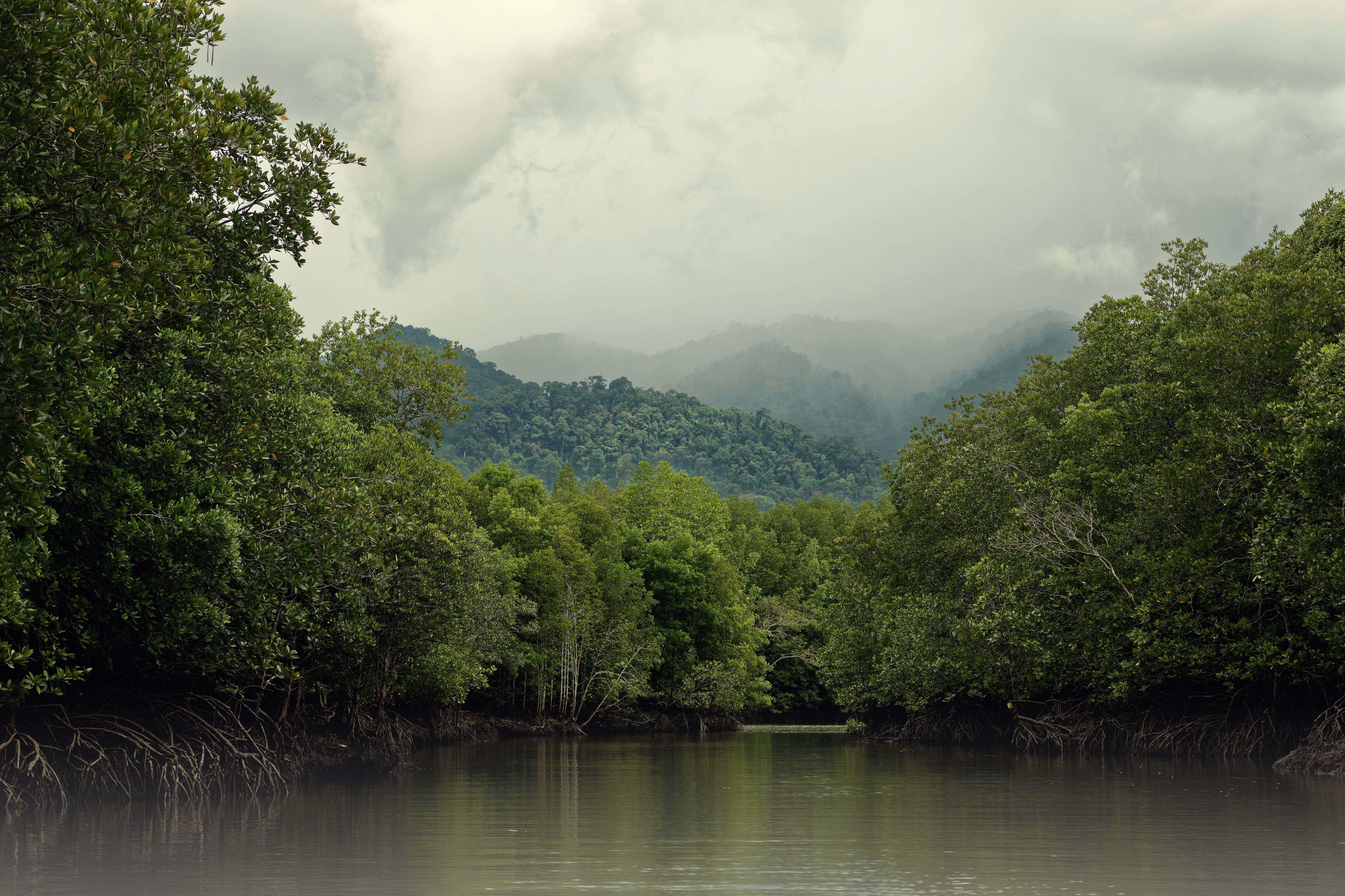 Mangroves Malaysia