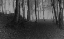 The woods, three ways