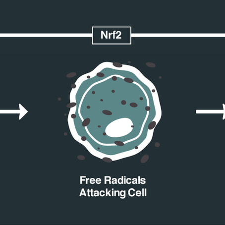 What is Nrf2 Activation?